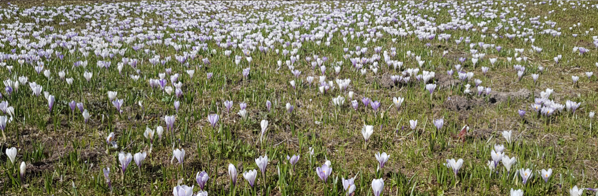 Frühjahr_1